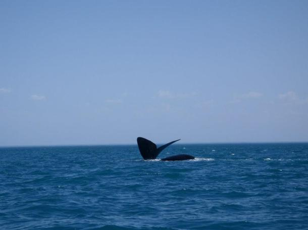 Whale watching off of Peninsula Valdes